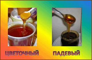 Падевый мед: что это такое, польза и вред