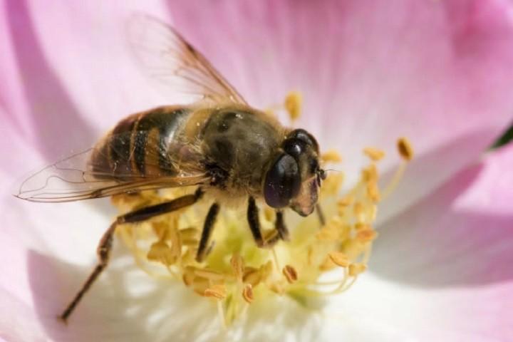 Польза пчел в жизни человека