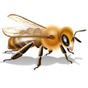Польза пчелы
