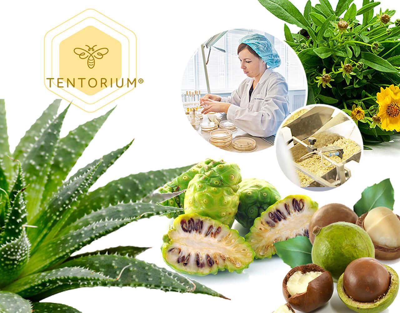 Экстракты целебных растений и масла