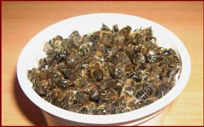 Пчелиный подмор, лечение